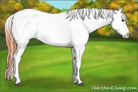 Horse Color:Bay Dun Sabino Appaloosa