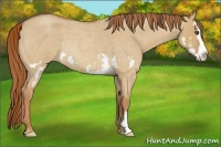 Horse Color:Red Dun Roan Splash Frame Rabicano