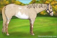 Horse Color:Red Dun Roan Splash Frame Rabicano