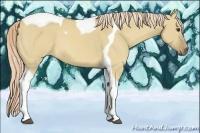 Horse Color:Palomino Dun Tobiano