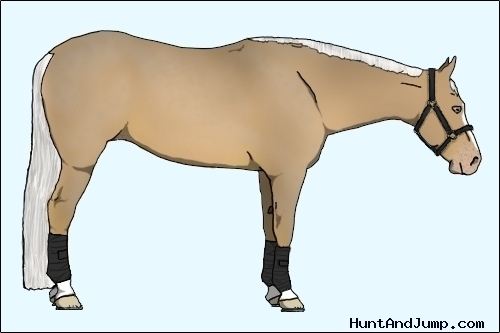 Horse Color:Gold Champagne