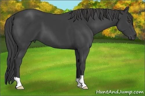 Horse Color:Smokey Black