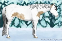 Horse Color:Buckskin Dun Splash Tobiano