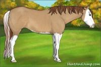 Horse Color:Red Dun Splash