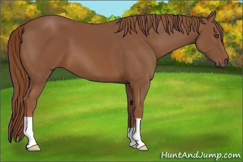 Horse Color:Chestnut Frame
