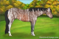 Horse Color:Bay Ice