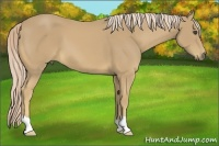 Horse Color:Palomino