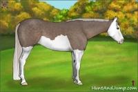 Horse Color:Silver Black Splash