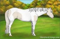 Horse Color:Smokey Creme Tobiano