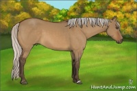 Horse Color:Silver Bay Dun