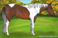 Horse Color:Bay Tobiano