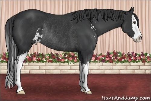 Horse Color:Black Sabino Splash Rabicano