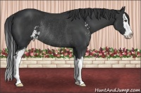 Horse Color:Black Sabino Splash Rabicano
