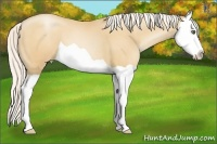 Horse Color:Silver Amber Champagne Pearl Splash