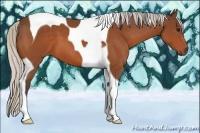 Horse Color:Silver Bay Tobiano