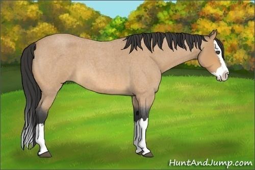 Horse Color:Buckskin Roan Splash