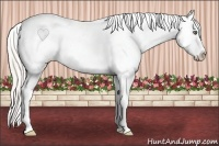 Horse Color:White Spotted Silver Classic Champagne Dun Splash Appaloosa