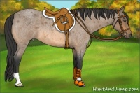 Horse Color:Buckskin Roan
