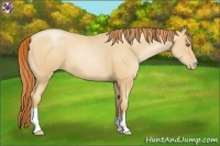 Horse Color:Amber Champagne Pearl