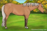 Horse Color:Silver Bay