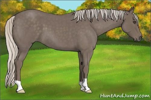 Horse Color:Silver Blue Roan