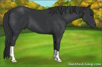 Horse Color:Black
