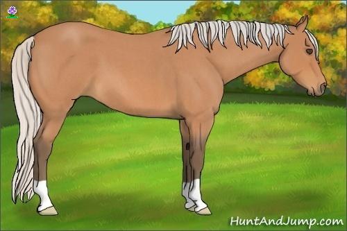 Horse Color:Silver Bay Roan