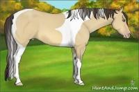Horse Color:Amber Cream Champagne Dun Tobiano