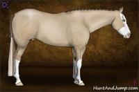 Horse Color:Grullo Pearl Splash