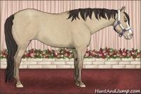 Horse Color:Classic Champagne Roan Dun Splash Frame