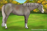 Horse Color:Silver Black Splash
