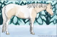 Horse Color:White Spotted Silver Buckskin Pearl Tobiano