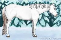 Horse Color:Bay Splash Tobiano Appaloosa Rabicano
