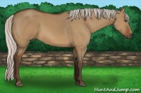 Horse Color:Silver Bay Dun Frame