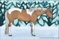Horse Color:Silver Buckskin Tobiano
