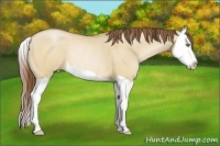 Horse Color:Bay Pearl Dun Splash Rabicano