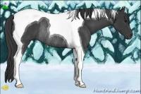 Horse Color:Smokey Black Tobiano Rabicano