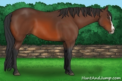 Horse Color:Bay Splash Frame