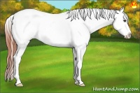 Horse Color:Bay Dun Sabino Splash Appaloosa Rabicano