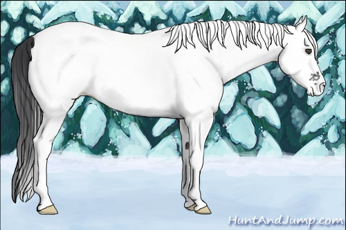 Horse Color:White Spotted Blue Roan