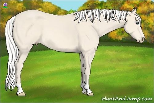 Horse Color:Silver Perlino