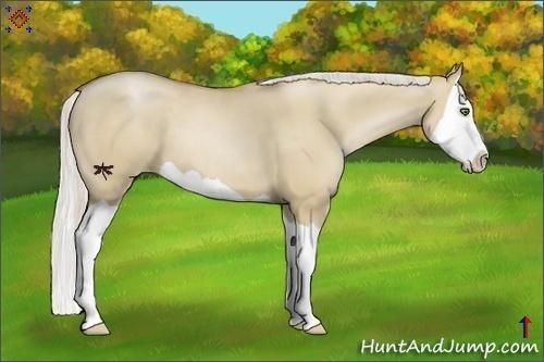 Horse Color:Silver Grullo Pearl Splash