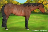 Horse Color:Bay Frame Rabicano