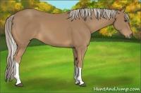 Horse Color:Palomino Tobiano