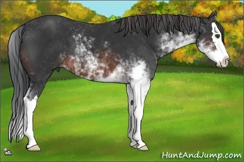 Horse Color:Brown Sabino Splash