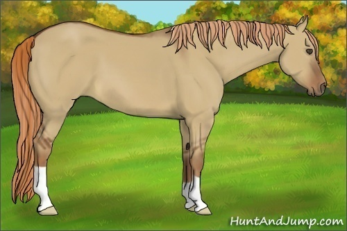 Horse Color:Red Dun