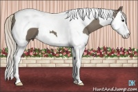 Horse Color:Silver Smokey Black Splash Tobiano