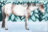 Horse Color:White Spotted Bay Tobiano