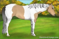 Horse Color:Buckskin Roan Tobiano