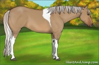 Horse Color:Silver Bay Dun Tobiano